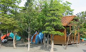 豊かな自然環境に囲まれた広い園庭
