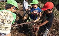 芋ほり・木の実拾い